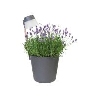 ELHO Flower Light Antraciet