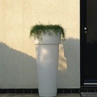 bloempilaar-pisa-onverlicht - Marcantonio 611