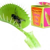 venus-vliegenval-vleesetende-plant